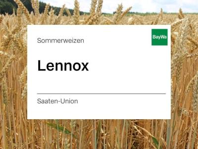 Sommerweizen Lennox