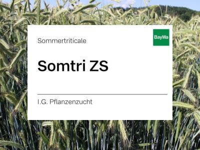 Sommertriticale Somtri ZS ungebeizt 30 kg Sack