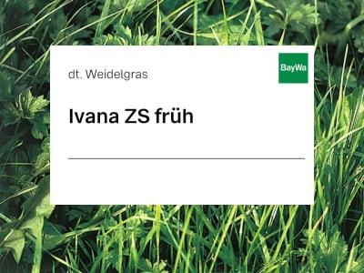 Deutsches Weidelgras Saatgut Ivana früh ZS 25 kg Sack