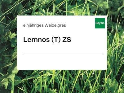 Einjähriges Weidelgras Lemnos tetraploid ZS 25 kg Sack