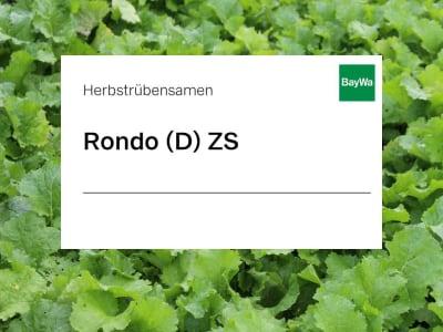 Herbstrübensamen Rondo diploid ZS