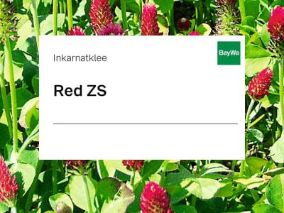 Inkarnatklee Red ZS 25 kg Sack