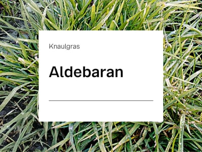 Knaulgras Aldebaran spät ZS 15 kg Sack