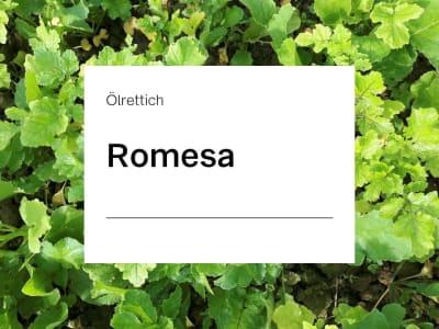 Ölrettich Saatgut Romesa ZS  25 kg Sack