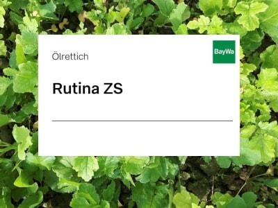 Ölrettich Rutina ZS  25 kg Sack