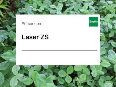 Perserklee Laser ZS 25 kg Sack