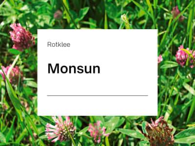 Rotklee Monsun tetraploid ZS 25 kg Sack