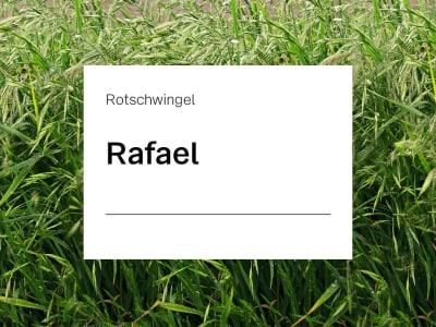 Rotschwingel Saatgut Rafael ZS 15 kg Sack