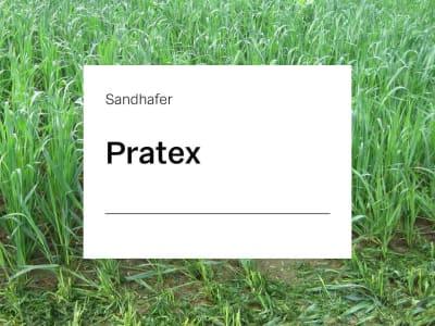 Sandhafer Saatgut Pratex ZS 25 kg Sack