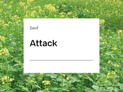 Senf Saatgut Attack ZS nematodenresistent nematodenresistent 25 kg Sack