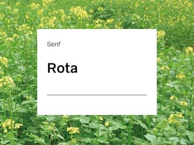Senf Saatgut Rota ZS  25 kg Sack