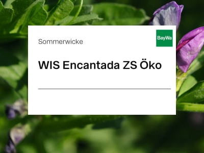 Sommerwicke Saatgut Encantada ZS Öko 25 kg Sack