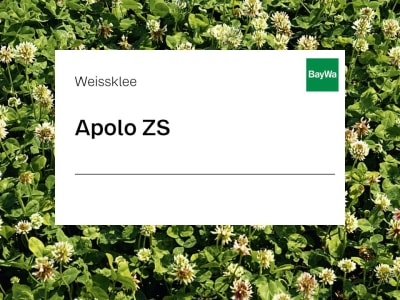 Weissklee Apolo ZS 25 kg Sack
