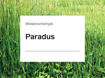 Wiesenschwingel Pardus ZS 20 kg Sack