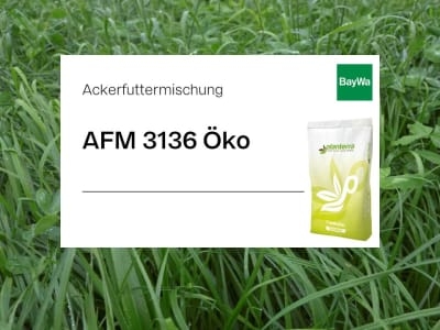 Planterra Ackerfuttermischung AFM 3136 mehrjährig Öko  500 kg BigBag