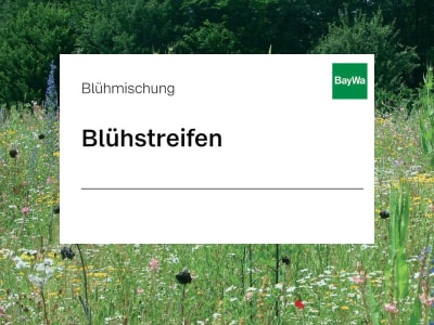 Zeller Blühstreifen Einjährig blühtenreiche Mischung, mit schnellem Wuchs, für kurzfristige Begrünung 10 kg Sack
