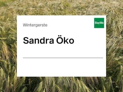 Wintergerste Sandra ZS Öko
