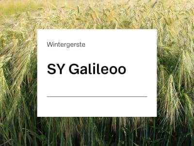 Wintergerste Saatgut SY Galileoo ZS mehrzeilige Futtergerste