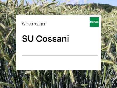Winterroggen Saatgut SU Cossani ZS Hybrid Standard