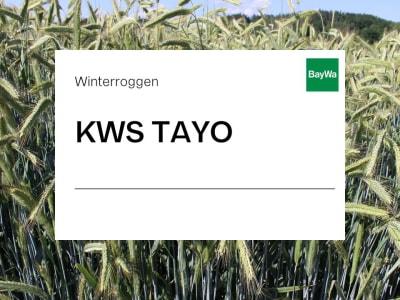 Winterroggen Saatgut KWS TAYO ZS Hybrid Standard