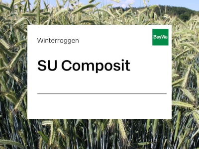Winterroggen Saatgut SU Composit ZS Hybrid Standard  EH