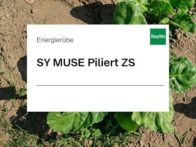 Energierübe Saatgut SY MUSE Piliert ZS Force