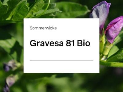 Sommerwicke Gravesa 81 Z2 Öko 25 kg Sack