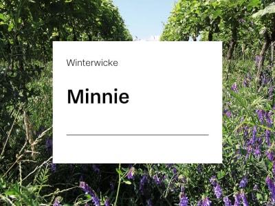 Winterwicke Saatgut Minnie ZS 25 kg Sack