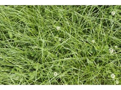 BQSM ® BQSM - D2a Dauerwiese Mischung für mittlere bis schwere Böden, niederschlagsreiche Gebiete, auch Moorböden (vorwiegend Südbayern) mit Wiesenfuchsschwanz 12 kg Sack