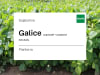 Sojabohne Galice ungeimpft+ungebeizt