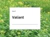 Senf Valiant ZS  25 kg Sack