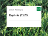 Welsches Weidelgras Saatgut Daphnis tetraploid ZS 25 kg Sack