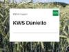 Winterroggen Saatgut KWS Daniello ZS Hybrid Standard  EH