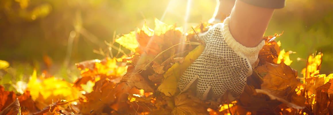Header_Gartenkalender-November_NEU_1160x400.jpg