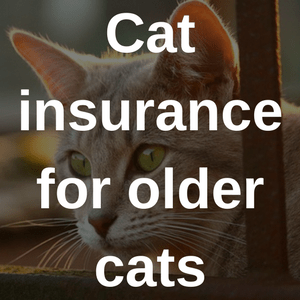Cat Insurance For Older Cats Bought By Many