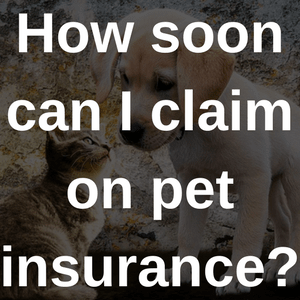 Pet Insurance With Immediate Cover Bought By Many