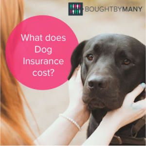 What Does Dog Insurance Cost Bought By Many