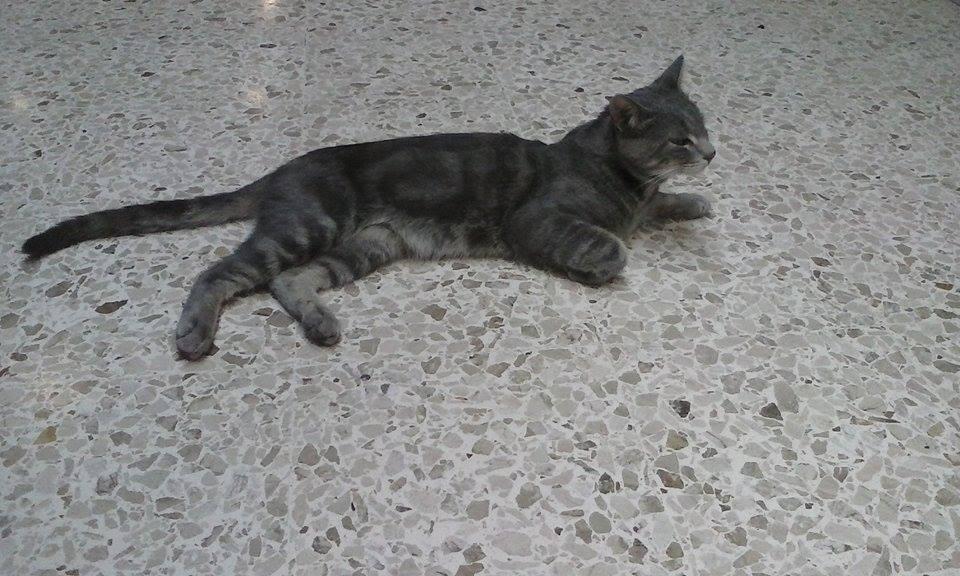La chatte de ma femme 5 - 4 1