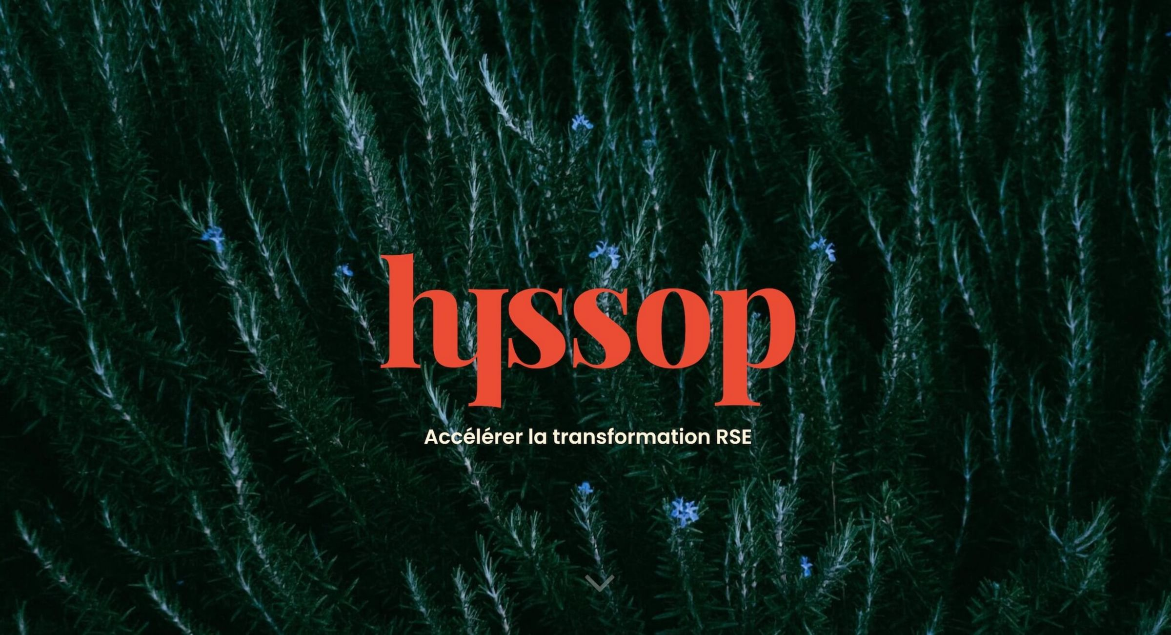 hyssop-website-screenshot