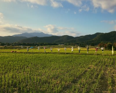 A line of scarecrows protects a rice field in rural Kyoto.
