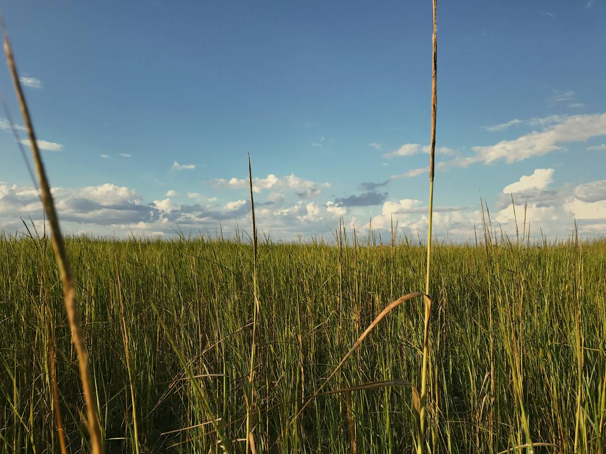 Looking out into a field of grass on a sunny afternoon in South Carolina