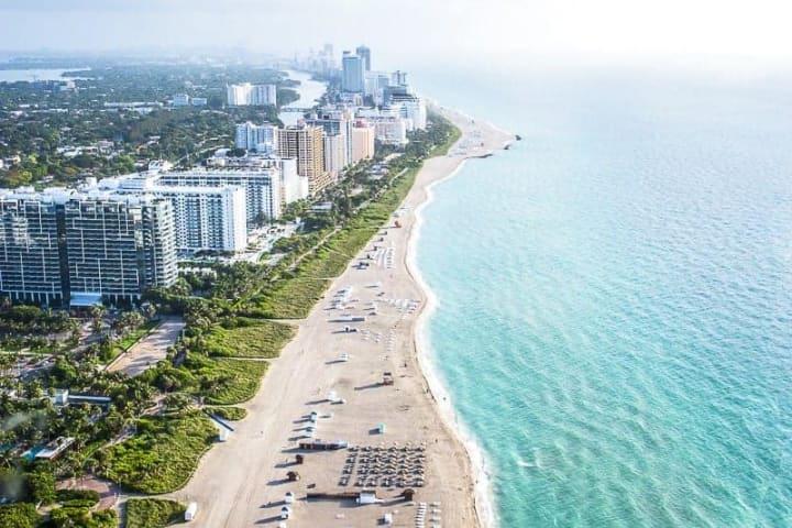 Bee Removal Miami
