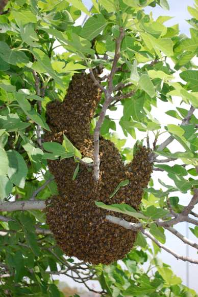 Bee hive on Brutton CT Dallas TX