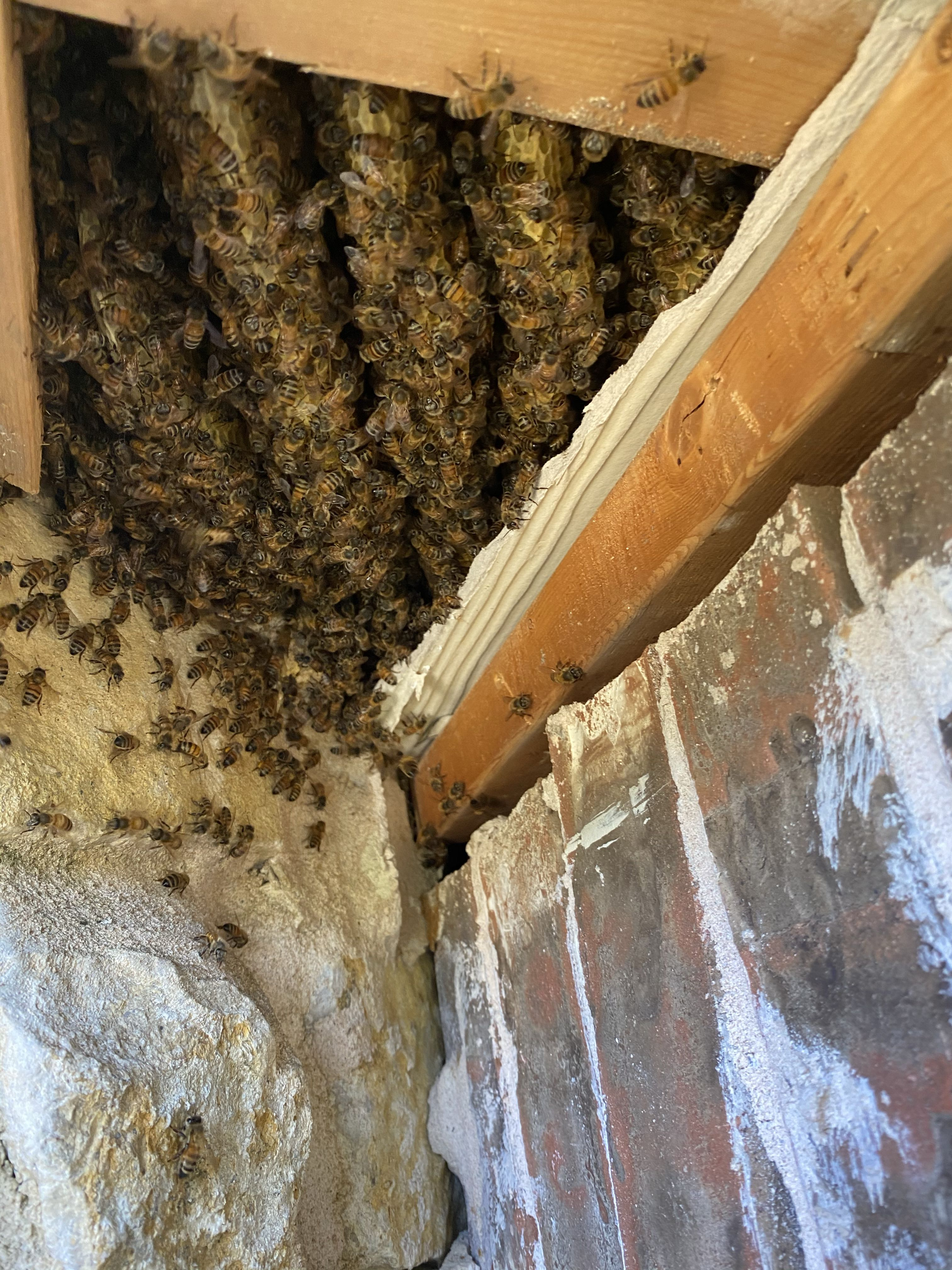 Bee swarm in fort worth