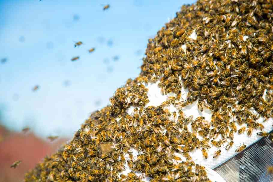 Bee Save Bee Removal in City