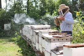 Bee Services in CITY