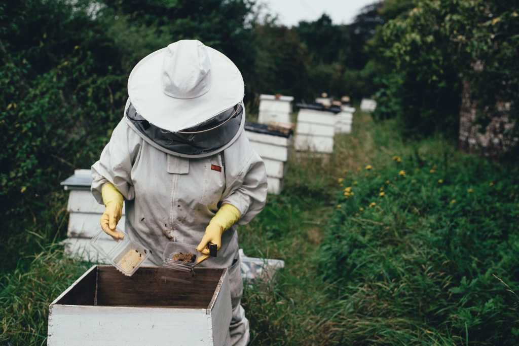 Bee keeper in fort worth