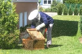 bee removal houston