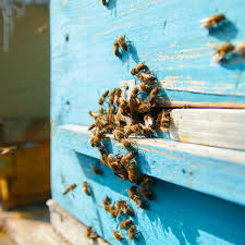 the colony bee proofing