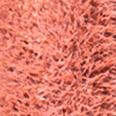 Dailus Nude 11 Bem Resolvida - Batom Líquido 4ml
